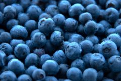 Blueberry U-Pick Starts This Weekend!